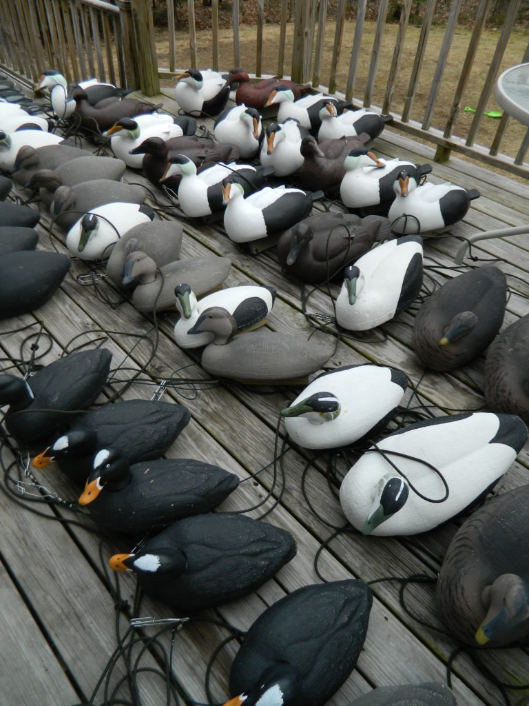 Maine sea duck decoys, Maine sea duck hunts, Maine sea duck guide